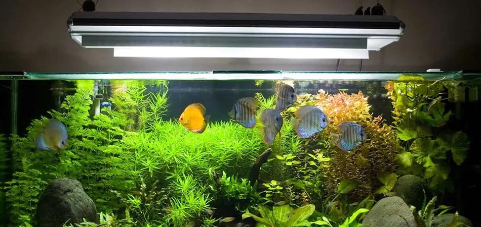 How-Long-To-Run-UV-Sterilizer-Aquarium